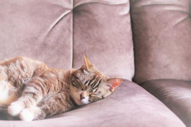 ストレス解消に猫の癒し